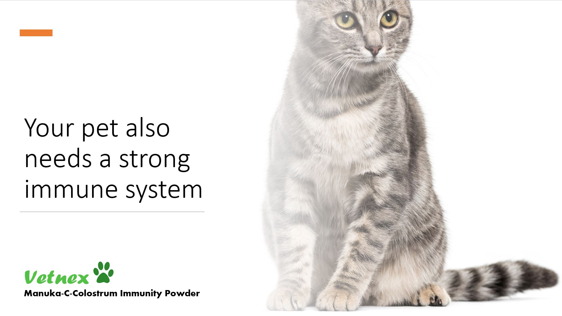 Your Pet Also Needs a Strong Immune System